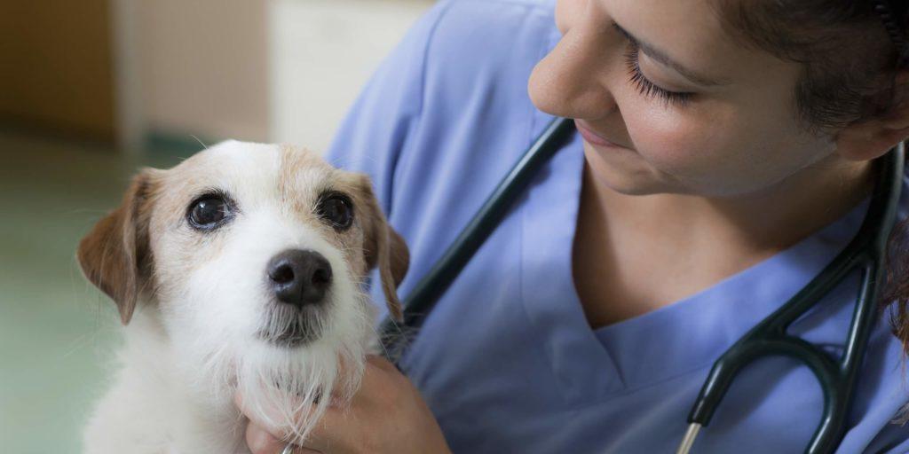 когда нужен ветеринар на дом срочно