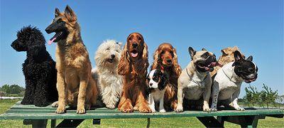 что делает клуб собаководства
