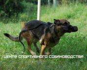 Центр Спортивного Собаководства