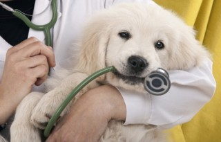 зачем нужен ветеринар на дом круглосуточно