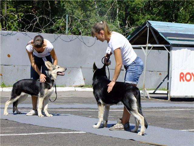 выбор площадки для выгула собак