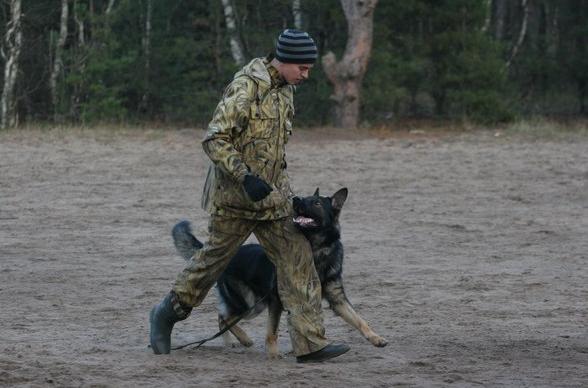 как найти дрессировщика собак