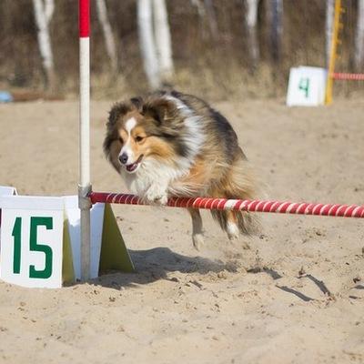 грамотная тренировка собак