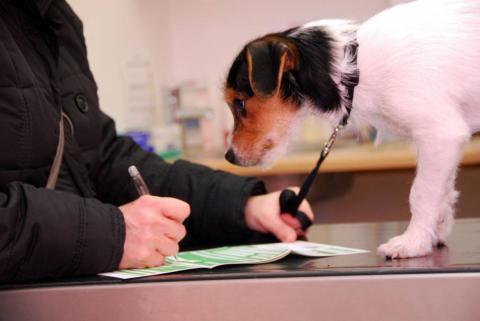 как вступить в школу дрессировки собак