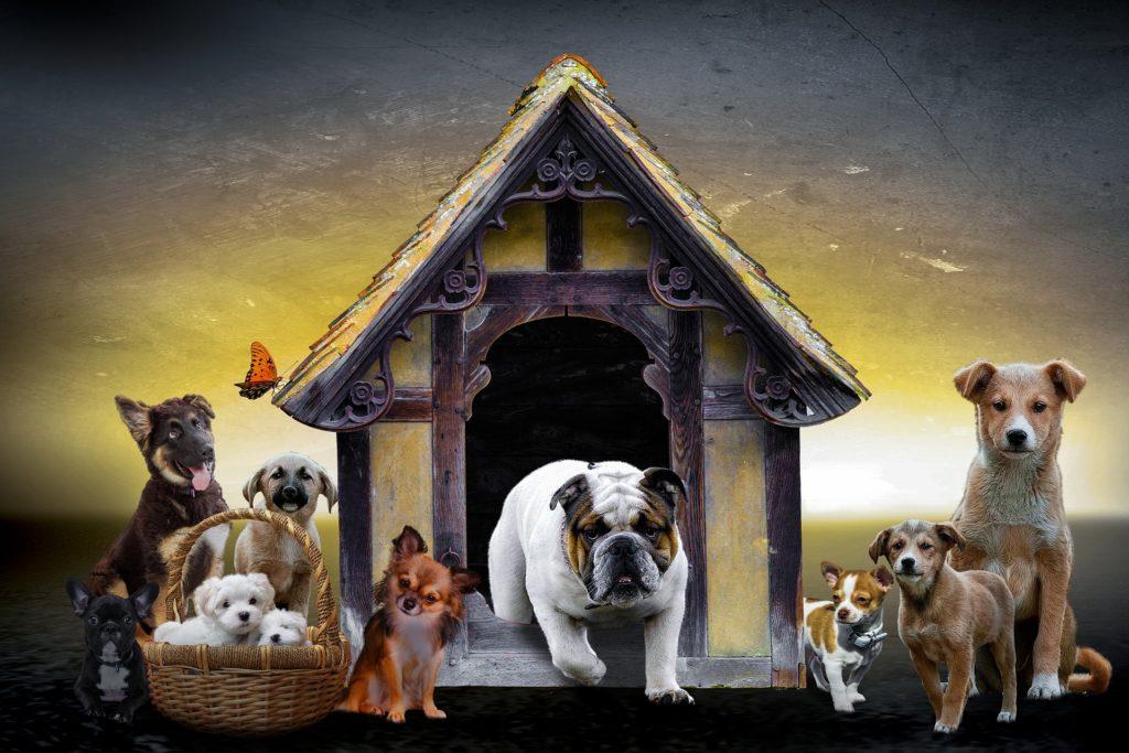 выбор гостиницы для кошек и собак