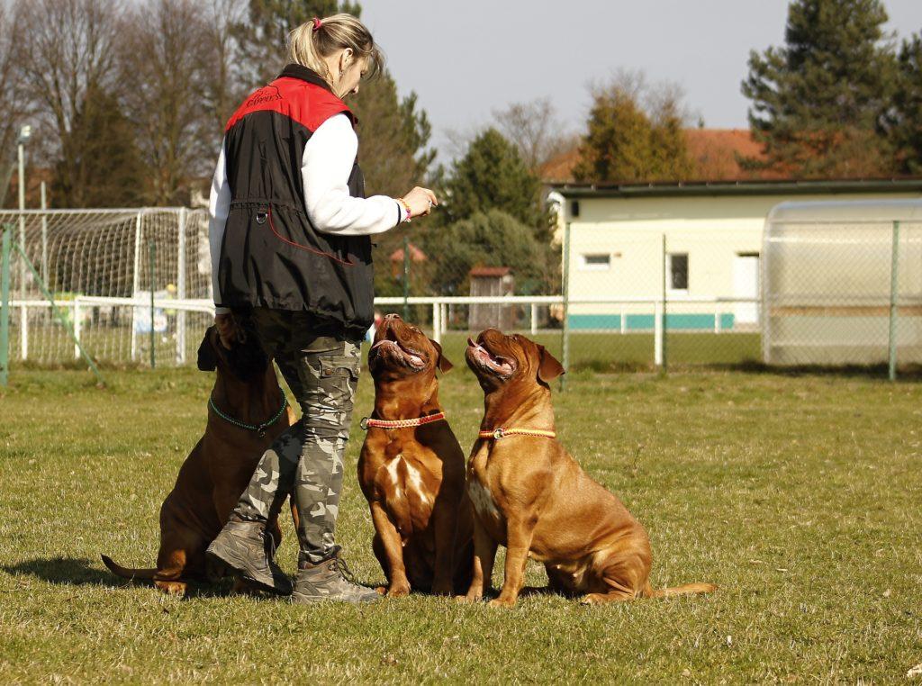 секреты воспитания собаки