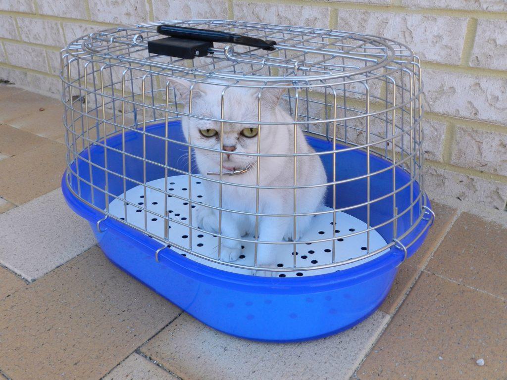 что должно быть в зоогостинице для кошек