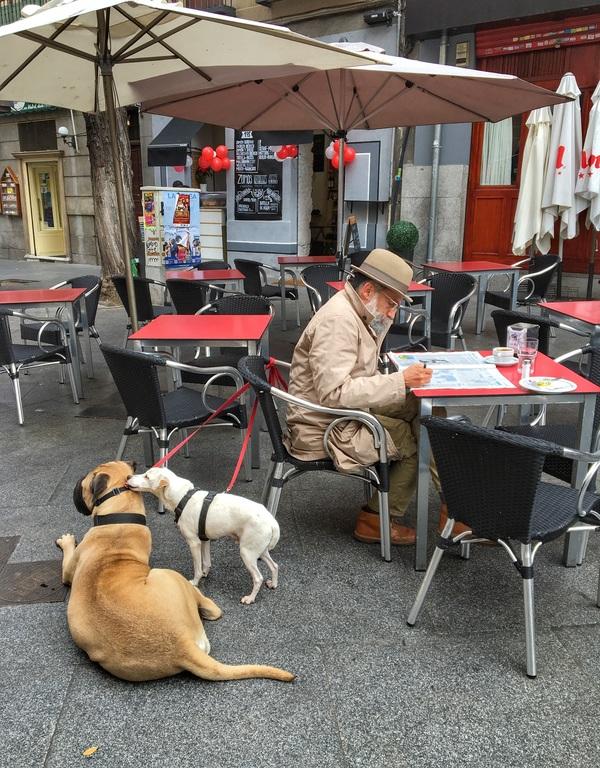 выгуливать собак за деньги