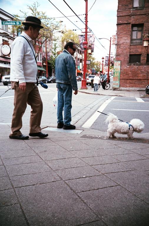 кому доверить выгулять собаку